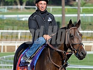 Rusty Slipper works at Santa Anita for the Breeders' Cup Oct. 26, 2014.