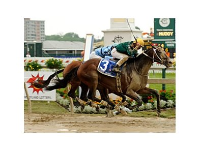 "Student Council, shown winning the Pimlico Special (gr. I) <br><a target=""blank"" href=""http://www.bloodhorse.com/horse-racing/photo-store?ref=http%3A%2F%2Fpictopia.com%2Fperl%2Fgal%3Fprovider_id%3D368%26ptp_photo_id%3D4532482%0D%0A%26ref%3Dstory"">Order This Photo</a>"