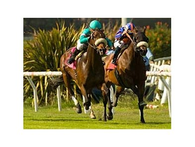"Madeo (left) wins the Inglewood at Hollywood Park. <br><a target=""blank"" href=""http://www.bloodhorse.com/horse-racing/photo-store?ref=http%3A%2F%2Fgallery.pictopia.com%2Fbloodhorse%2Fgallery%2F69713%2Fphoto%2F8042402%2F%3Fo%3D0"">Order This Photo</a>"