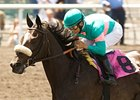 Zenyatta could return to racing in the Santa Margarita Handicap (gr. I) on March 13.