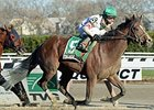 Palace Rules Fall Highweight Handicap