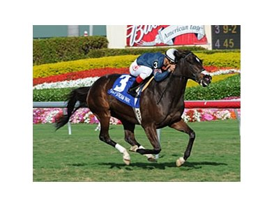 "Cherokee Queen won the Suwannee River Stakes at Gulfstream on Feb. 5.<br><a target=""blank"" href=""http://www.bloodhorse.com/horse-racing/photo-store?ref=http%3A%2F%2Fpictopia.com%2Fperl%2Fgal%3Fprovider_id%3D368%26ptp_photo_id%3D9395060%26ref%3Dstory"">Order This Photo</a>"