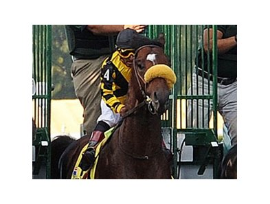 Tomcito continues his preparations for the Kentucky Derby after a third-place finish in the Florida Derby.