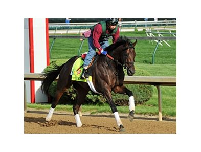 "Itsmyluckyday<br><a target=""blank"" href=""http://photos.bloodhorse.com/TripleCrown/2013-Triple-Crown/Kentucky-Derby-Workouts/29026796_jvcnn8#!i=2490692615&k=rvNr8dp"">Order This Photo</a>"