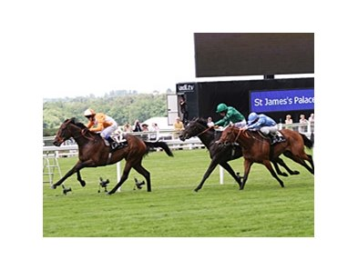 "Most Improved comes home strong to win the St. James's Palace Stakes.<br><a target=""blank"" href=""http://photos.bloodhorse.com/AtTheRaces-1/at-the-races-2012/22274956_jFd5jM#!i=1914968047&k=sv4Z5N4"">Order This Photo</a>"