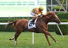 "Wise Dan<br><a target=""blank"" href=""http://photos.bloodhorse.com/AtTheRaces-1/at-the-races-2012/22274956_jFd5jM#!i=2019757428&k=LhshsJZ"">Order This Photo</a>"