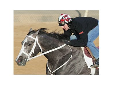 Old Fashioned preps for the Southwest Stakes at Oaklawn Park.