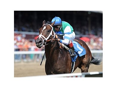 "Archwarrior is the 5-2 morning line choice in the Champagne Stakes.<br><a target=""blank"" href=""http://photos.bloodhorse.com/AtTheRaces-1/at-the-races-2012/22274956_jFd5jM#!i=2057347026&k=KvLzqKc"">Order This Photo</a>"