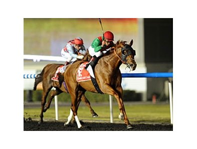 Animal Kingdom in the Dubai World Cup.