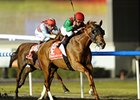 "Animal Kingdom won the 2013 Dubai World Cup.<br><a target=""blank"" href=""http://photos.bloodhorse.com/AtTheRaces-1/at-the-races-2013/27257665_QgCqdh#!i=2434322570&k=NPV4drk"">Order This Photo</a>"