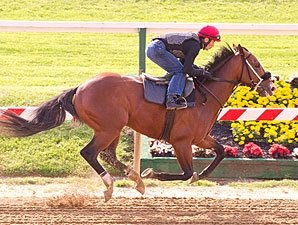 Zetterholm Adds a Touch of Grey to Preakness
