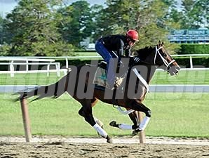 Ride On Curlin - Belmont Park, May 29, 2014.