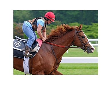 "Shackleford at Belmont Park<br><a target=""blank"" href=""http://www.bloodhorse.com/horse-racing/photo-store?ref=http%3A%2F%2Fpictopia.com%2Fperl%2Fgal%3Fprovider_id%3D368%26ptp_photo_id%3D9550950%26ref%3Dstory"">Order This Photo</a>"