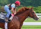 Shackleford Available for Viewing Nov. 9-11