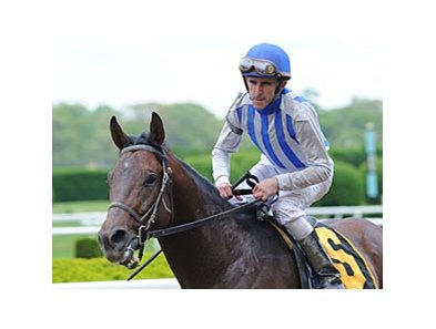 "Alternation is the 2-1 morning line favorite for the Essex.<br><a target=""blank"" href=""http://www.bloodhorse.com/horse-racing/photo-store?ref=http%3A%2F%2Fpictopia.com%2Fperl%2Fgal%3Fprovider_id%3D368%26ptp_photo_id%3D9525609%26ref%3Dstory"">Order This Photo</a>"