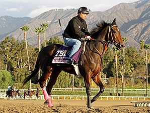 Concave - 2013 Breeders' Cup, October 30, 2013.