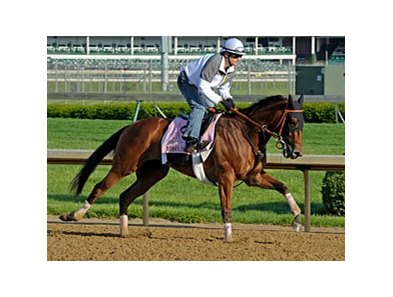 "Beholder<br><a target=""blank"" href=""http://photos.bloodhorse.com/TripleCrown/2013-Triple-Crown/Kentucky-Derby-Workouts/29026796_jvcnn8#!i=2485964190&k=Jb2SxWh"">Order This Photo</a>"