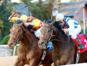 Alternation (inside) Oaklawn allowance win 1/15/11