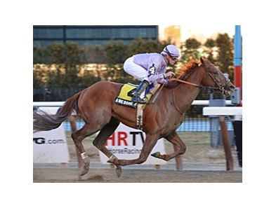 "Awesome Act won the Gotham in his dirt debut.<br><a target=""blank"" href=""http://www.bloodhorse.com/horse-racing/photo-store?ref=http%3A%2F%2Fpictopia.com%2Fperl%2Fgal%3Fprovider_id%3D368%26ptp_photo_id%3D8825557%26ref%3Dstory"">Order This Photo</a>"