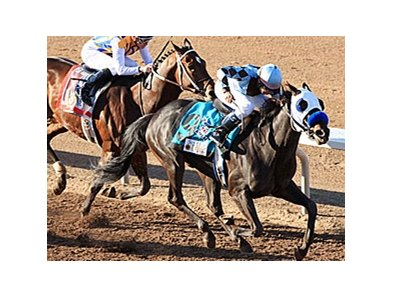 Twice The Appeal in the 2011 Sunland Derby.