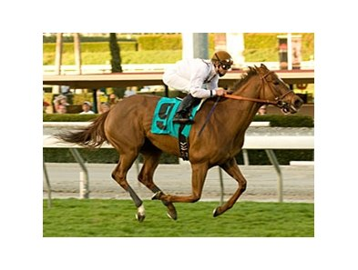 "Cat By the Tale is the likely favorite for the Wilshire.<br><a target=""blank"" href=""http://www.bloodhorse.com/horse-racing/photo-store?ref=http%3A%2F%2Fpictopia.com%2Fperl%2Fgal%3Fprovider_id%3D368%26ptp_photo_id%3D8726094%26ref%3Dstory"">Order This Photo</a>"