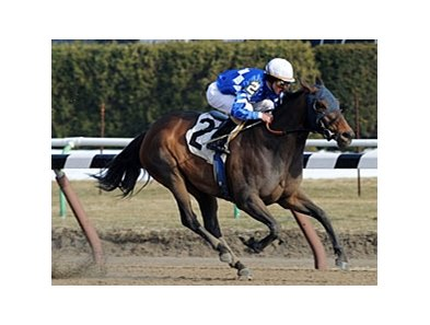 "Nicole H is the morning-line favorite in the Distaff Handicap.<br><a target=""blank"" href=""http://www.bloodhorse.com/horse-racing/photo-store?ref=http%3A%2F%2Fpictopia.com%2Fperl%2Fgal%3Fprovider_id%3D368%26ptp_photo_id%3D9352627%26ref%3Dstory"">Order This Photo</a>"
