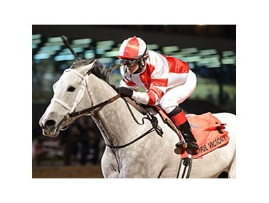 Joyful Victory won the Houston Ladies Classic on Jan. 26 by 4 1/2 lengths.