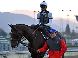 Handsome Mike - 2013 Breeders' Cup, October 30, 2013.