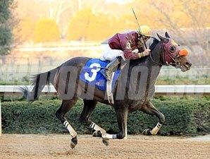 Mazucambera wins the 2011 Dixie Belle.