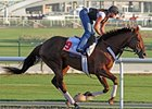 Fly Down at Meydan Race Course.