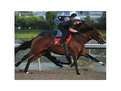 Sligovitz breezes at Woodbine in preparation for the Breeders' Stakes.