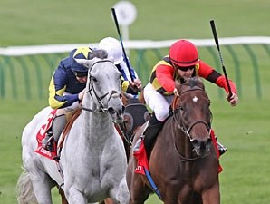 Sahpresa wins the 2011 Kingsom of Bahrain Sun Chariot.