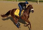 Visionaire working at Churchill Downs April 28.