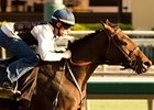 "2009 Kentucky Derby winner Mine That Bird faces older horses in the Goodwood.<br><a target=""blank"" href=""http://www.bloodhorse.com/horse-racing/photo-store?ref=http%3A%2F%2Fpictopia.com%2Fperl%2Fgal%3Fprovider_id%3D368%26ptp_photo_id%3D8539914%26ref%3Dstory"">Order This Photo</a>"