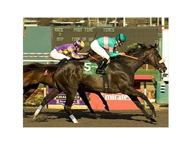 "Zenyatta overtakes Switch to capture number 19.<br><a target=""blank"" href=""http://www.bloodhorse.com/horse-racing/photo-store?ref=http%3A%2F%2Fpictopia.com%2Fperl%2Fgal%3Fprovider_id%3D368%26ptp_photo_id%3D9217803%26ref%3Dstory"">Order This Photo</a>"