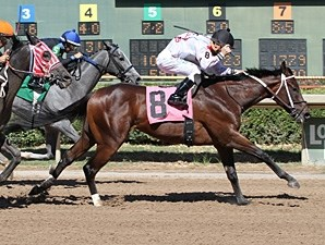Say Charlie wins the 2013 Louisiana Stallion Stakes - Colts and Geldings Division