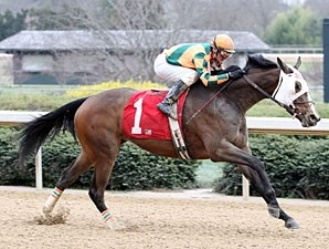 No Such Word wins the 2010 Honeybee.