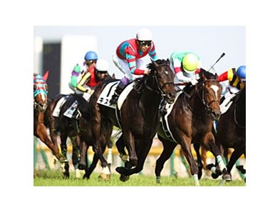 Kizuna wins the Tokyo Yushun (Japanese Derby).