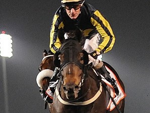 Krypton Factor in the Dubai Golden Shaheen.