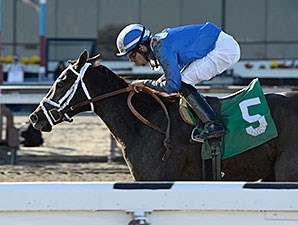 Mamdooha wins the 2014 Cicada.