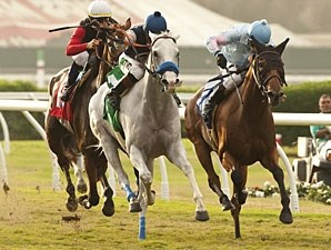 Egg Drop, grey, wins the Yellow Ribbon Handicap.
