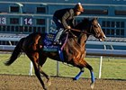 Contested