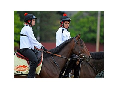 "Orb at Pimlico on May 16<br><a target=""blank"" href=""http://photos.bloodhorse.com/TripleCrown/2013-Triple-Crown/Preakness-Stakes-138/29423277_98XmS6#!i=2515904068&k=94HSB5W"">Order This Photo</a>"