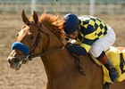 "Misremembered tries dirt for the first time in the Indiana Derby.<br><a target=""blank"" href=""http://www.bloodhorse.com/horse-racing/photo-store?ref=http%3A%2F%2Fpictopia.com%2Fperl%2Fgal%3Fprovider_id%3D368%26ptp_photo_id%3D8342024%26ref%3Dstory"">Order This Photo</a>"