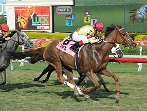 Hooh Why wins the 2012 Florida Sunshine Millions F & M Turf.