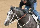 Old Fashioned at work at Oaklawn on March 8