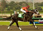 "Georgie Boy cruises in the San Carlos.<br><a target=""blank"" href=""http://www.bloodhorse.com/horse-racing/photo-store?ref=http%3A%2F%2Fpictopia.com%2Fperl%2Fgal%3Fprovider_id%3D368%26ptp_photo_id%3D7790449%26ref%3Dstory"">Order This Photo</a>"