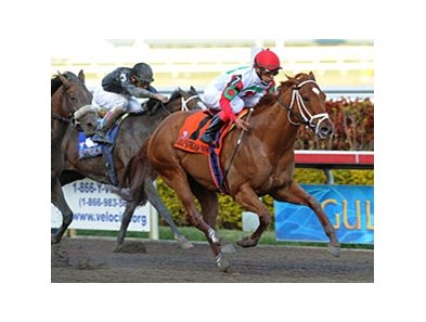 "D' Funnybone won the Hutcheson last month at Gulfstream.<br><a target=""blank"" href=""http://www.bloodhorse.com/horse-racing/photo-store?ref=http%3A%2F%2Fpictopia.com%2Fperl%2Fgal%3Fprovider_id%3D368%26ptp_photo_id%3D8802754%26ref%3Dstory"">Order This Photo</a>"