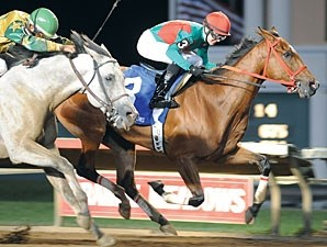 Proceed Bee wins the 2010 Prairie Meadows Handicap.