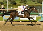 "Double Trouble won the 2008 Santa Maria <br><a target=""blank"" href=""http://www.bloodhorse.com/horse-racing/photo-store?ref=http%3A%2F%2Fpictopia.com%2Fperl%2Fgal%3Fprovider_id%3D368%26ptp_photo_id%3D3547250%0D%0A%26ref%3Dstory"">Order This Photo</a>"